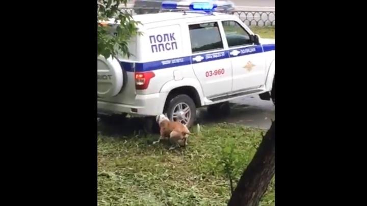 На Уралмаше полицейские застрелили разъяренного пса, покусавшего прохожих