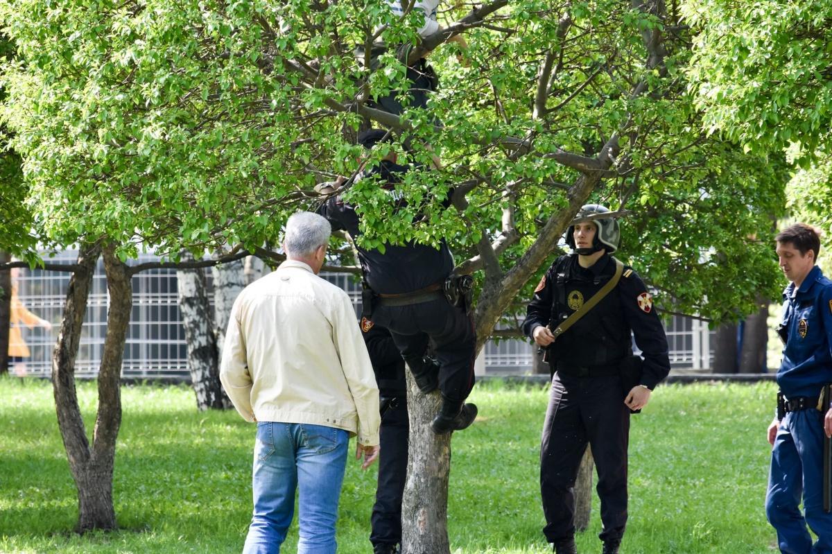 Чтобы задержать активистку, сотрудникам Росгвардии пришлось залезть на дерево