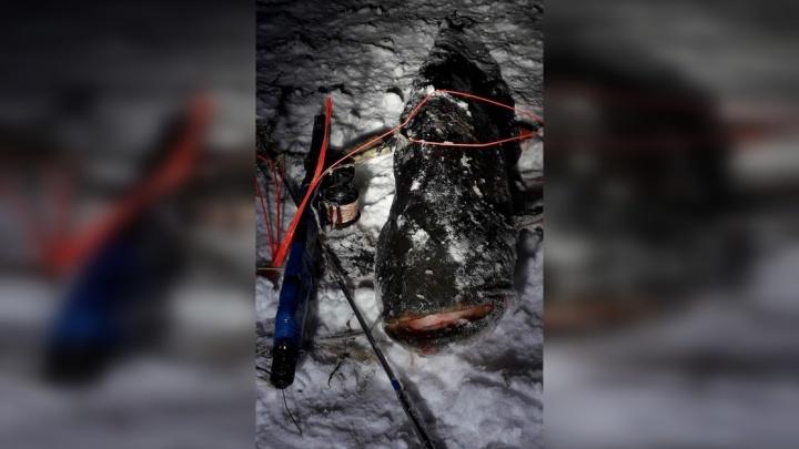 В Самарской области подводный охотник поймал сома весом 12 кг