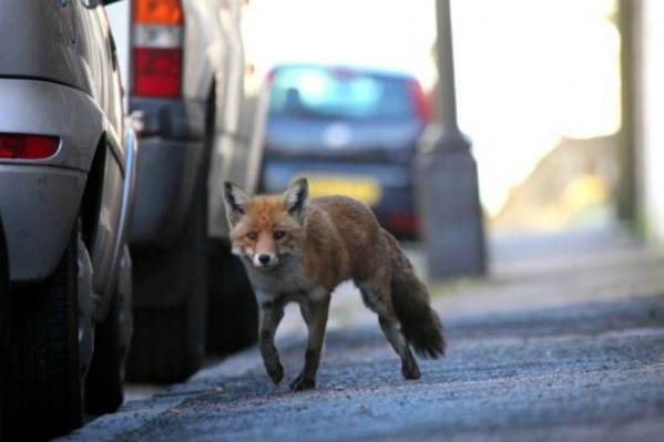 В регионе с начала года бешенством заболели четверо животных