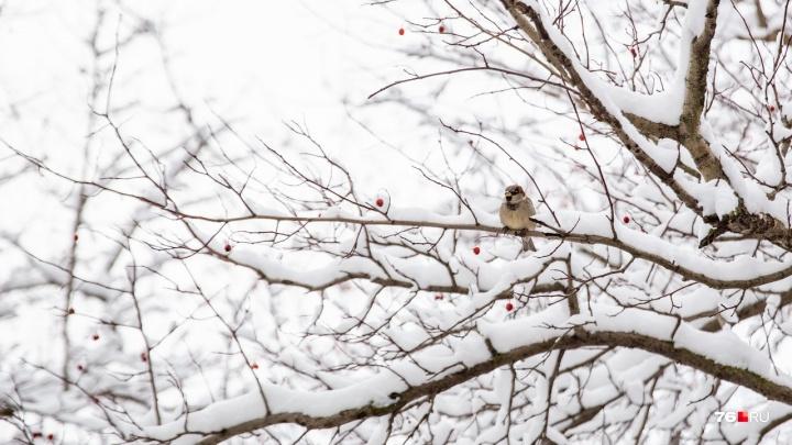 «Если сегодня оттепель…»: по народным приметам определяем погоду весной и летом