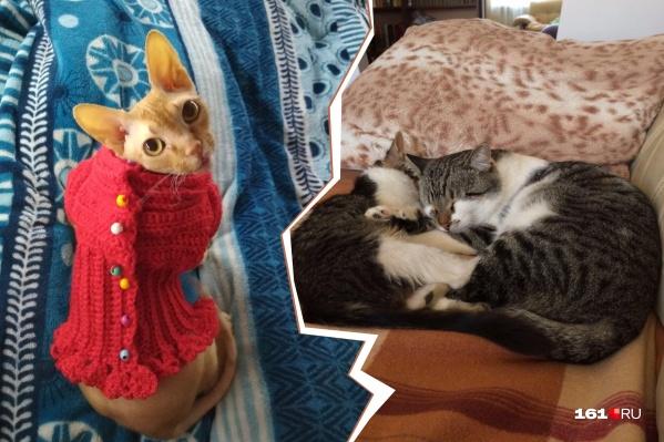 Котики хоть и шерстяные, но им всё равно не хватает тепла, пока не наступил отопительный сезон