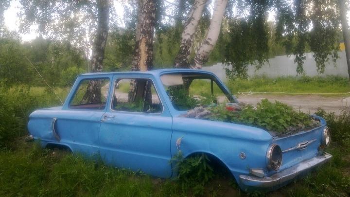 В Дзержинском районе пропала необычная клумба. Ее сделали внутри старого «Запорожца»
