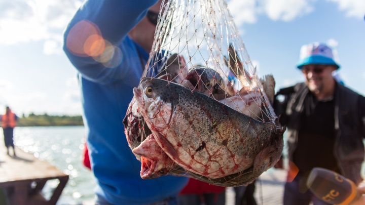 Южноуральского рыбака отдали под суд за улов на полмиллиона во время нереста