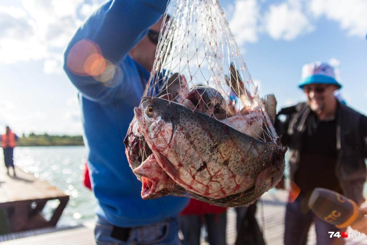 Иногда, когда хочется рыбку съесть, можно и сесть