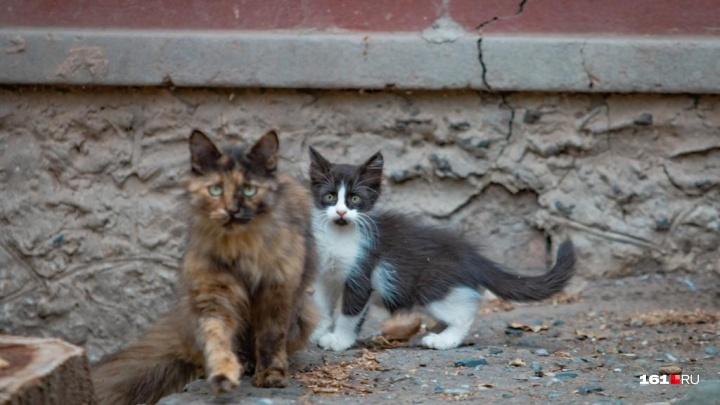 Жительница Нового Уренгоя просит ростовчан спасти кошек, заблокированных в подвале многоэтажки