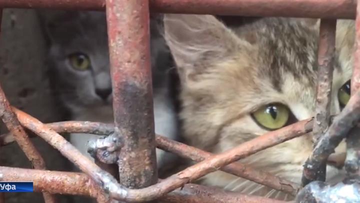 В Уфе после недельного заточения в подвале спасли котят