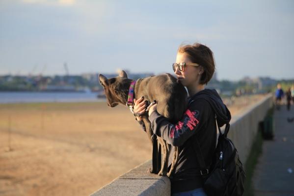 Администрация города запретила выгуливать собак на газонах и в местах массового скопления людей