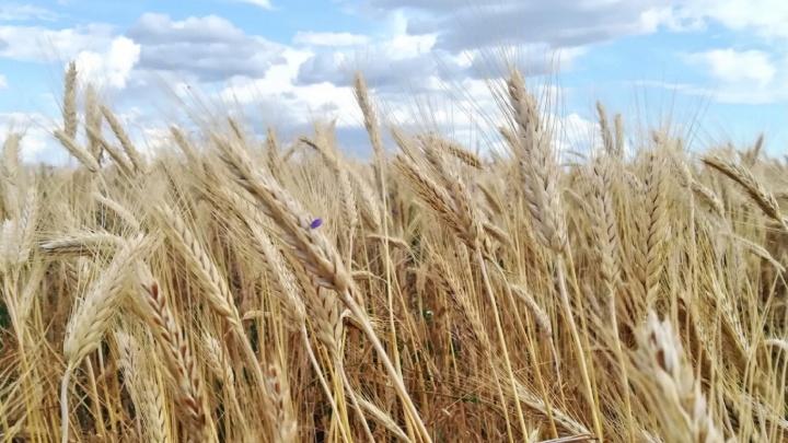 «Жаль, что никто не видит»: смотрим самые летние фото Волгоградской области, снятые на мобильник