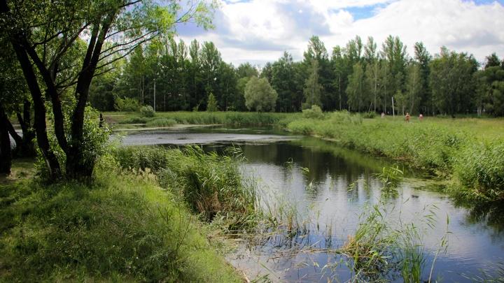Омским скверам присвоят статус лесопарковой зоны. Теперь там нельзя рубить деревья и строить здания