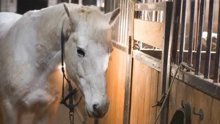9 мая из центра Екатеринбурга выгонят лошадей, которые катают детишек