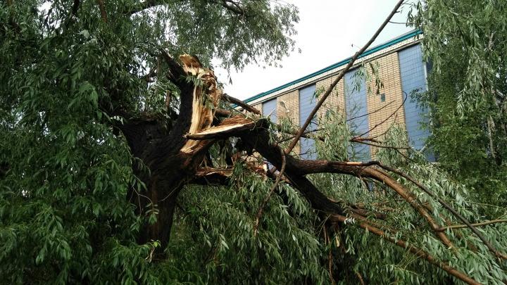 Ветер валил деревья и играл мусорными баками:под Челябинском пронёсся ураган