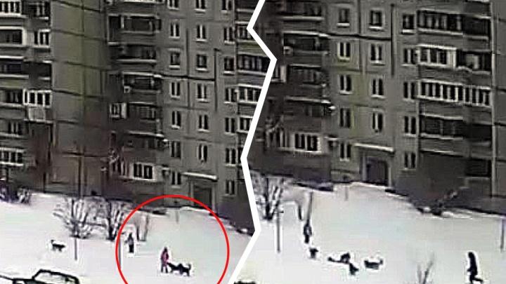 Соцсети: в Тольятти на ребенка напали бродячие собаки
