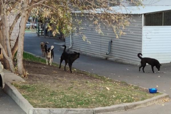 По оценкам очевидцев, на мальчика напали 7–8 собак<br>