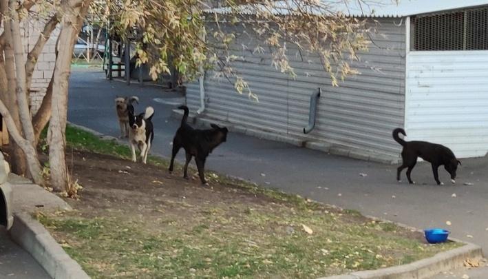 После нападения собак на ребенка в районе Шевченко возбуждено дело о халатности