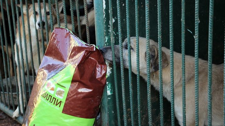 За пять дней омичи собрали 50 килограммов корма для бездомных собак