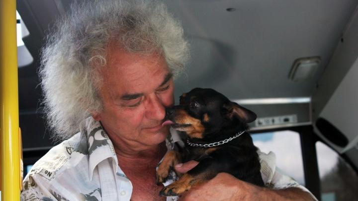 Напарник маршрутчика: как омский пёс Чарлик работает в «Газели» вместе с хозяином