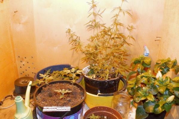 По некоторым адресам наркотики не только употребляли, но и выращивали
