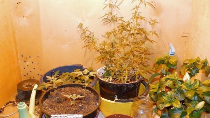 «Изъято более килограмма наркотиков»: полиция Зауралья проверила места, где могли быть притоны