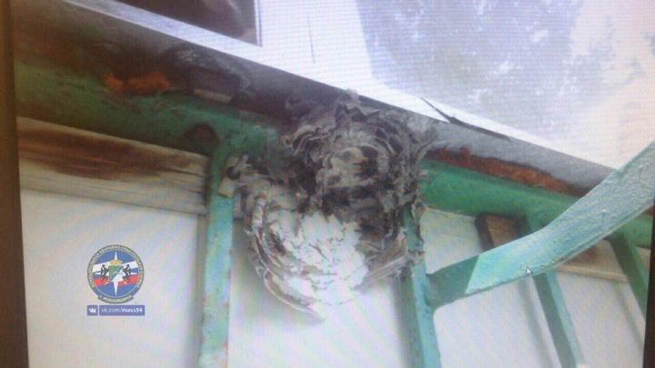 Спасатели вынесли с балкона сибирячки гнездо опасных насекомых