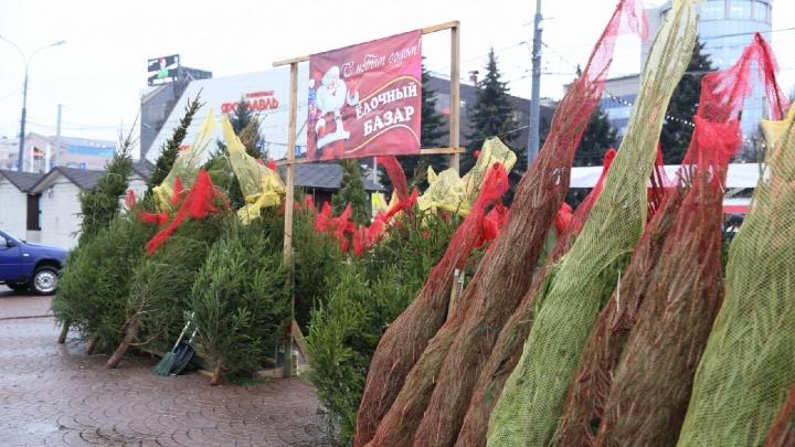 В Ярославле открылись ёлочные базары: адреса