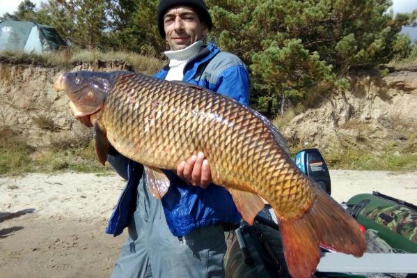 Сазан оказался самым большим за всю «карьеру» рыбака Андрея Сергеева