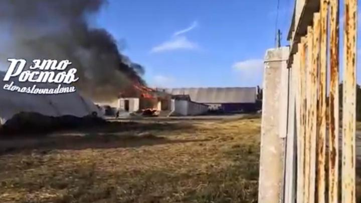 Видеозапись пожара в донской конноспортивной школе попала в Сеть