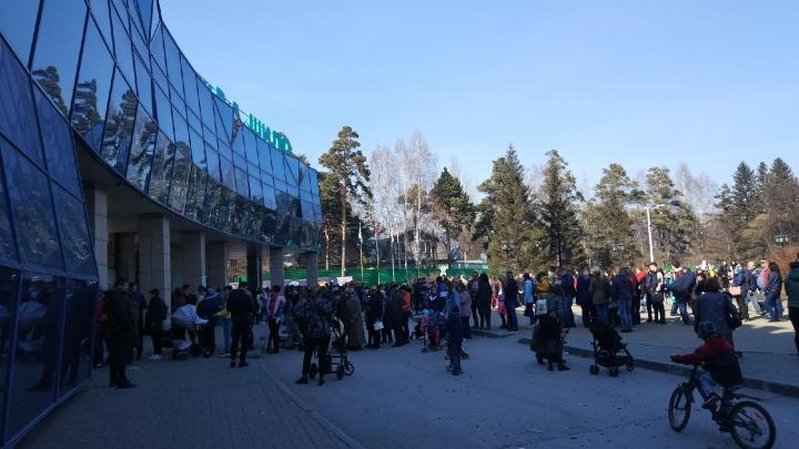 Очередь во все кассы: новосибирцы массово отправились в зоопарк и застряли у входа