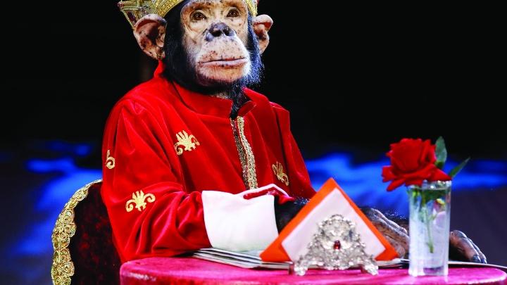 Тюменский цирк решил серьезно удивить зрителей: знакомимся с одним из участников новой программы