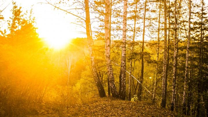 Тепло последнего воскресенья октября побило температурный рекорд
