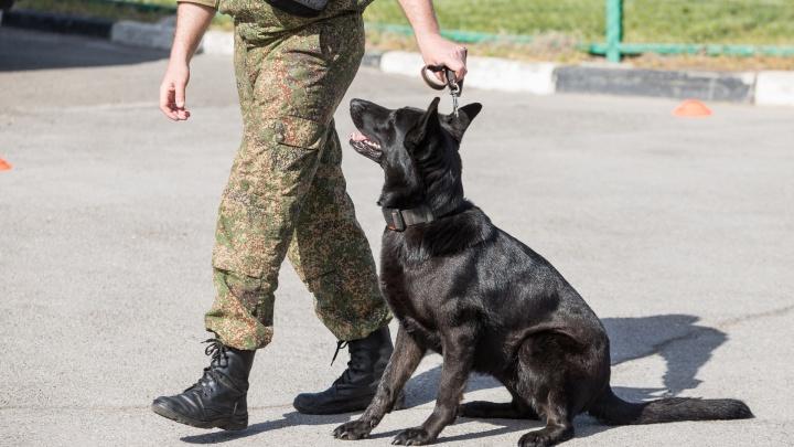 Спортсмена из Таганрога подозревают в контрабанде запрещенных веществ