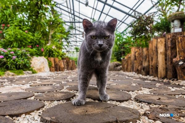 В ботсаду уже около 10 лет живёт кошка. Тропическая оранжерея — её любимое место