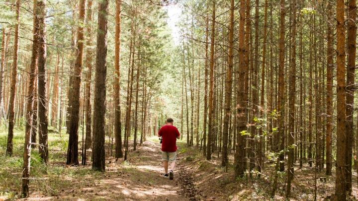 В Ярославле волонтёры решили расчистить лес вокруг министерства сатаны