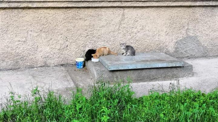 В подвале музыкальной школы нашли десяток замурованных котят