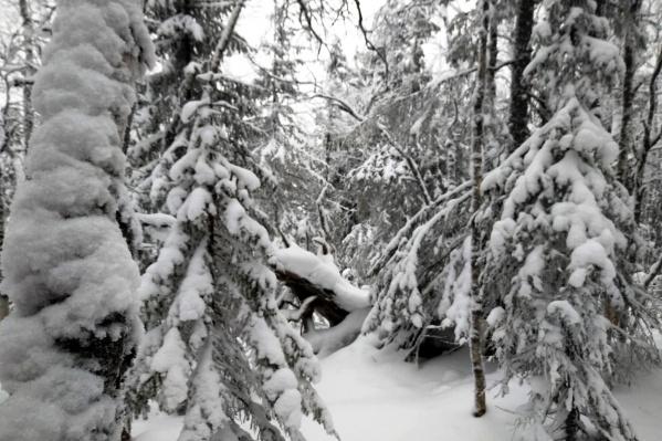 Это фото с Казанского Камня сделала туристка Александра за несколько дней до ЧП. Можно долго блуждать в таком лесу, если не знать основные правила выживания
