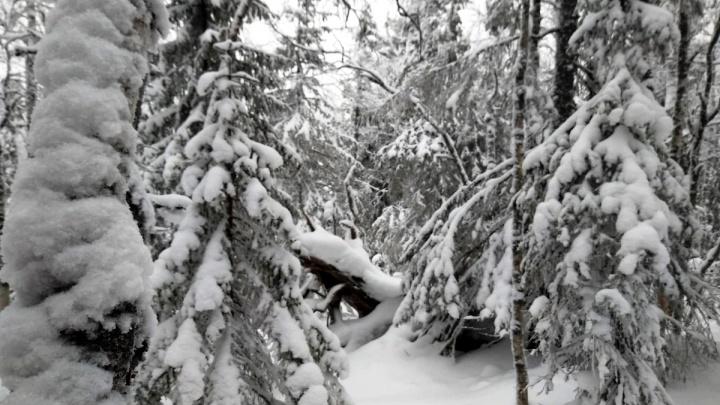 «Огонь не добудут — останутся без рук и ног»: как потерявшимся туристам выжить в уральском лесу
