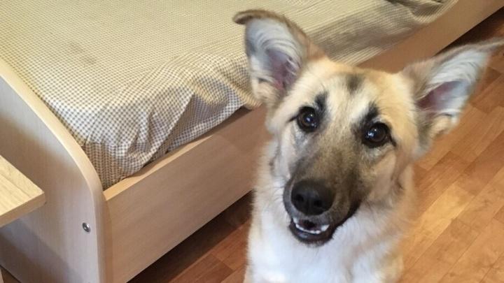 В самолёт не пускают: собака со сломанным хребтом ищет попутчика из Иркутска в Новосибирск