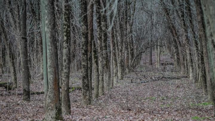 Трое пенсионеров и женщина с младенцем заблудились в Шолоховском лесу на Дону