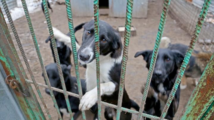 Уфа может лишиться единственного приюта для собак