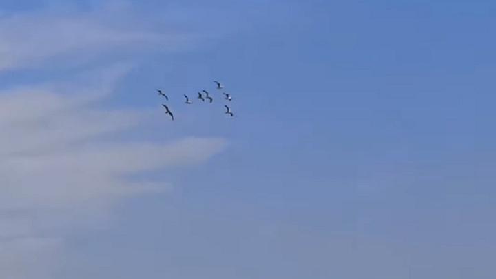 «Летают птицы, а сверху садятся самолёты»: волгоградцы встревожены за аэропорт после истории А321