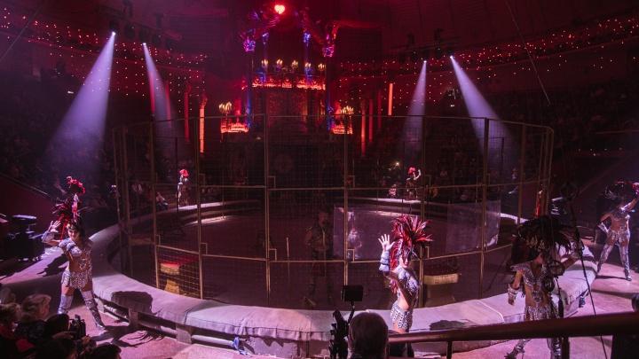 Тюмень вздрогнула от шоу: смотрим, как прошла премьера нового циркового представления