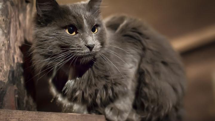 Пенсионерка из Кетово открыла дверь кошке, а впустила разбойника