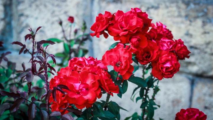 Волгоград — цветочный город: смотрите полный летних красок фоторепортаж