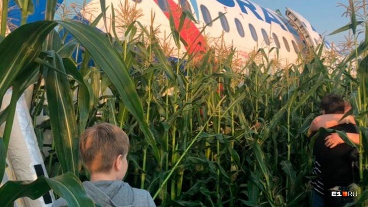 «Всех птиц не распугаешь»: уральский орнитолог — об аварийной посадке самолета на кукурузном поле