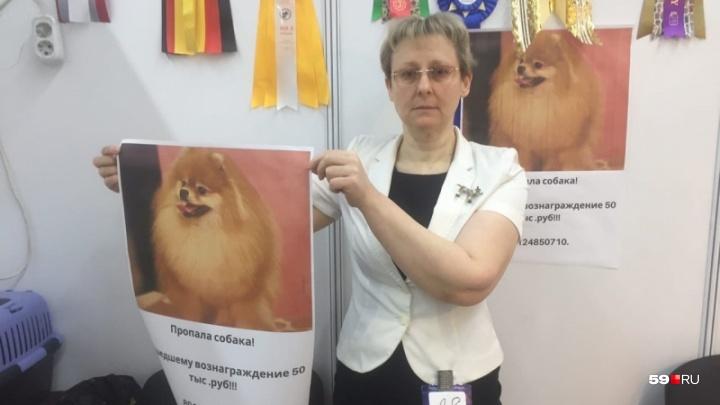«150 тысяч рублей или лучший щенок». В Перми повысили вознаграждение за возврат пропавшего шпица