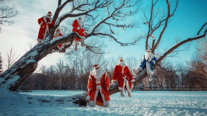 Деды Морозы на дереве стали лучшим фото дня декабря