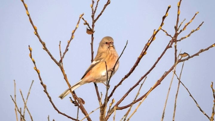 Любуемся перелетными птицами, которые вернулись в Красноярск после зимовки