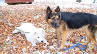 Дружелюбные собаки собрали почти 100 тысяч для новосибирского приюта— смотрим фото