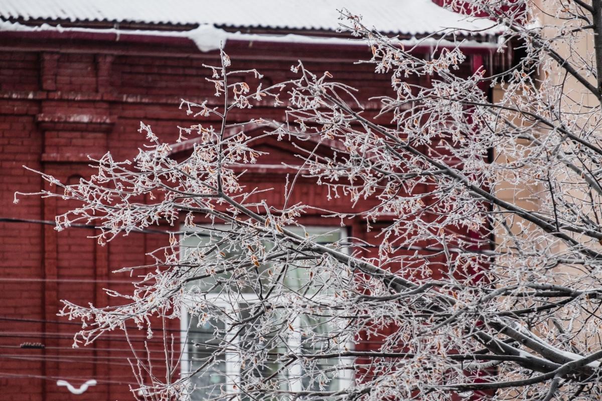 Если льда на ветках деревьев слишком много, то это может быть опасно