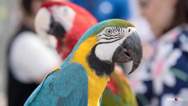 Несуществующая птица: в Ростове мужчина обманул покупателя попугая на 60 тысяч рублей